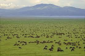 セレンゲティ国立公園|タンザニア|世界遺産オンラインガイド