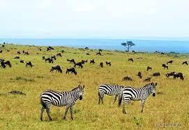 HIS 絶景 - マサイマラ国立保護区